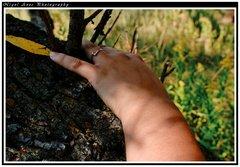woodland jackie 030
