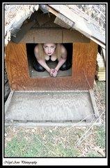 dog house 02