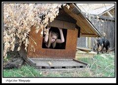 dog house 11