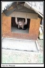 dog house 12