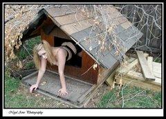 dog house 13