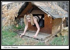 dog house 14