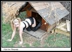 dog house 15