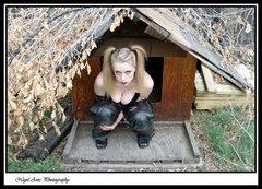 dog house 16