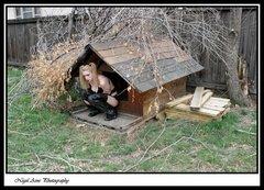 dog house 17